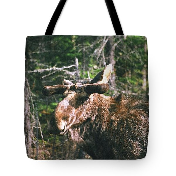 Bull Moose In Spring Tote Bag