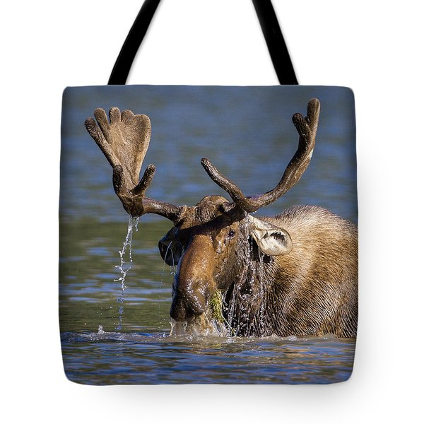 Bull Moose Sampling The Vegetation Tote Bag by Jack Bell