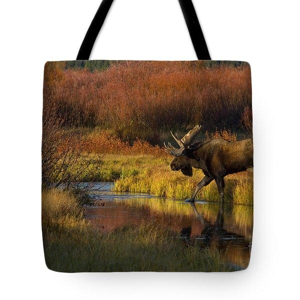 Bull Moose Tote Bag by Thomas and Pat Leeson