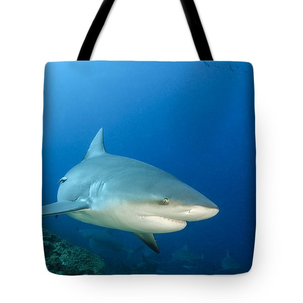 Bull Shark Beqa Lagoon Viti Levu Fiji Tote Bag