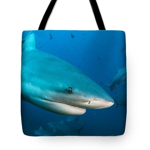 Bull Sharks In Beqa Lagoon Viti Levu Tote Bag