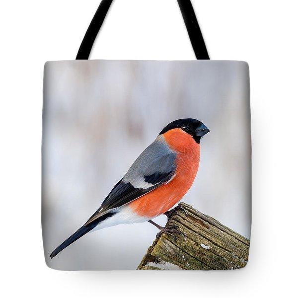 Bullfinch On The Edge Tote Bag