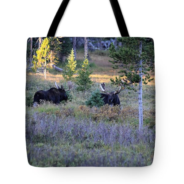 Bulls In The Meadow Tote Bag