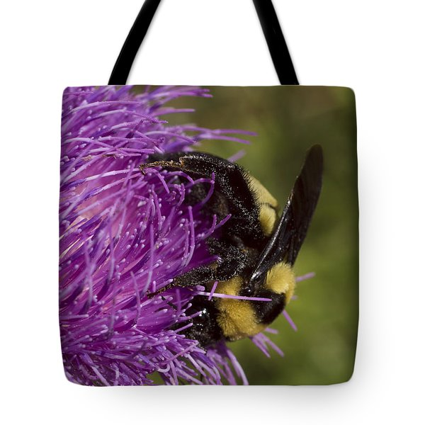 Bumble Bee On Thistle Tote Bag by Shelly Gunderson