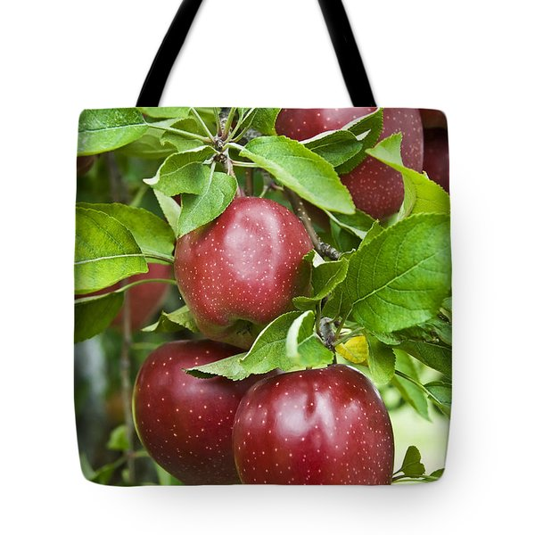 Bunch Of Red Apples Tote Bag by Anthony Sacco