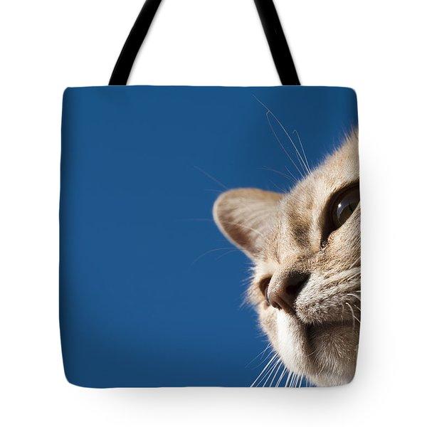 Burmilla Nose Tote Bag by Anne Gilbert