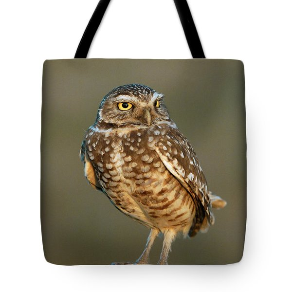 Burrowing Owl At Sunset Tote Bag by Doug Herr