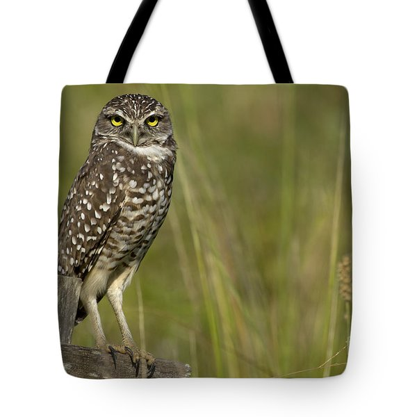Burrowing Owl Stare Tote Bag by Meg Rousher