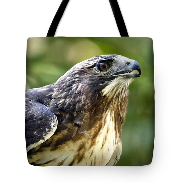 Buteo Jamaicensis Tote Bag by Christina Rollo
