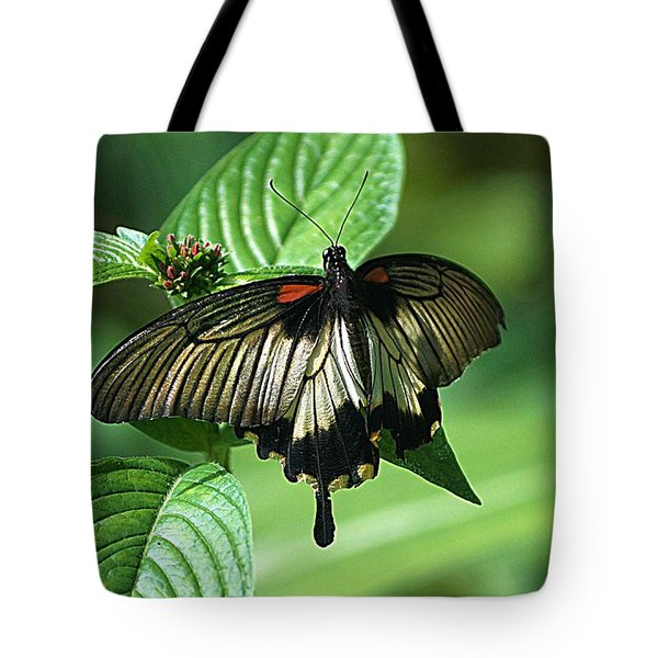Butterfly 2 Tote Bag by Kathy Churchman
