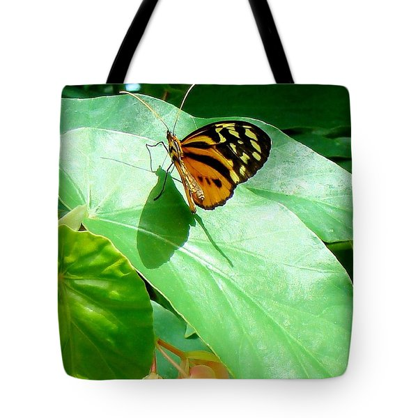 Tote Bag featuring the photograph Butterfly Chasing Shadow by Janette Boyd