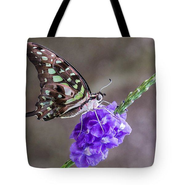 Butterfly - Tailed Jay I Tote Bag