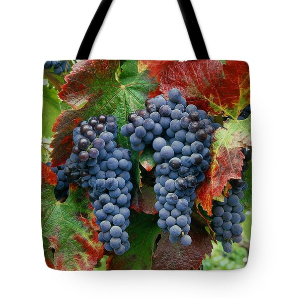 5b6374-cabernet Sauvignon Grapes At Harvest Tote Bag
