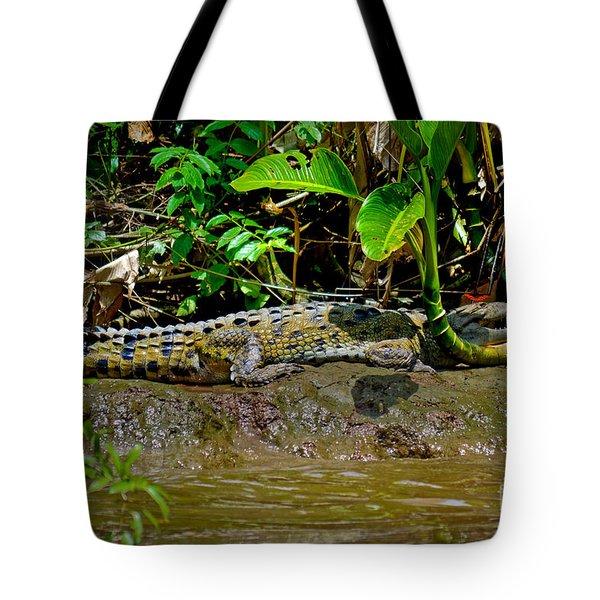 Caiman Cocodilus Tote Bag by Gary Keesler
