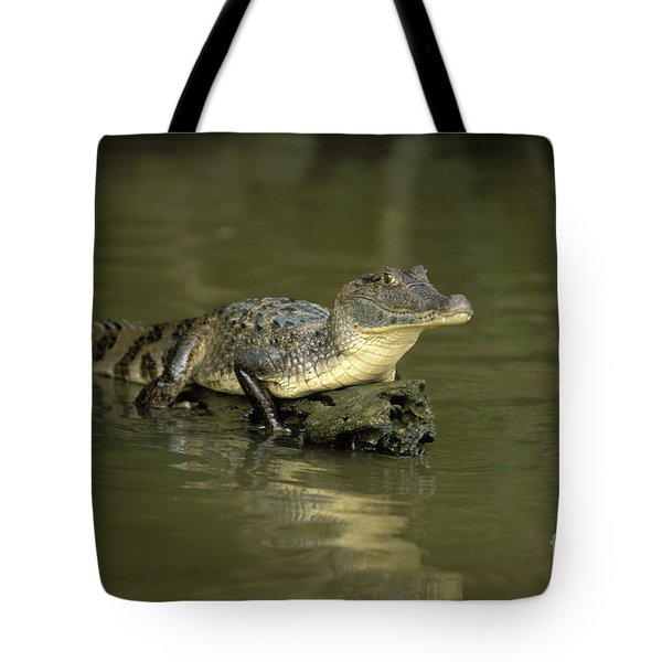 Caiman Crocodile Tote Bag