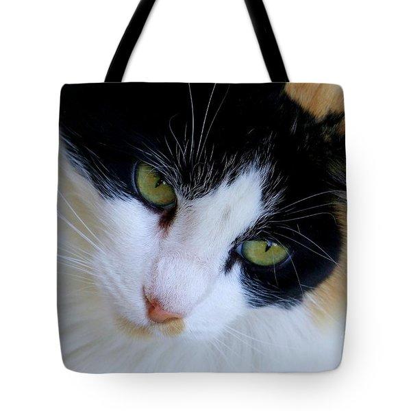 Calico 1 Tote Bag