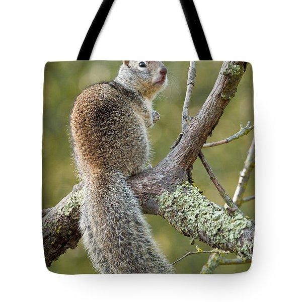 Tote Bag featuring the photograph California Ground Squirrel by Doug Herr