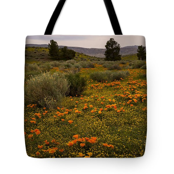 California Poppies In The Antelope Valley Tote Bag