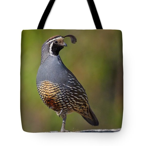 California Quail Tote Bag by Doug Herr