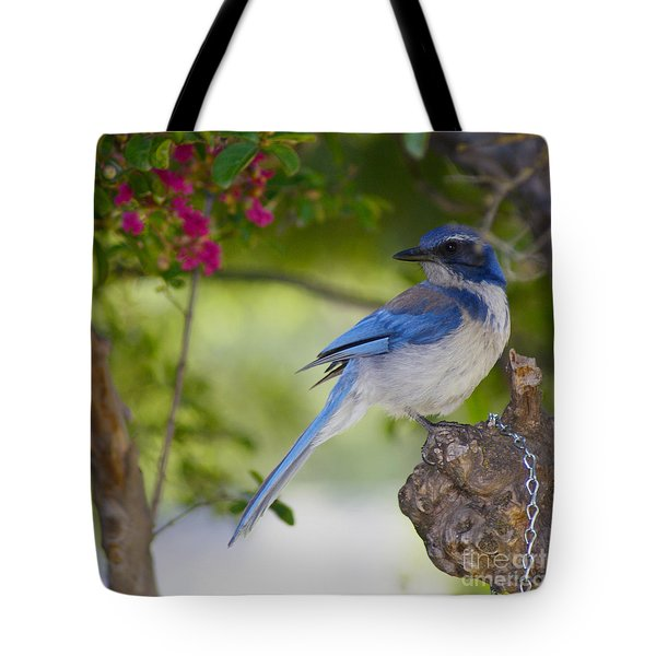 California  Scrub Jay Tote Bag