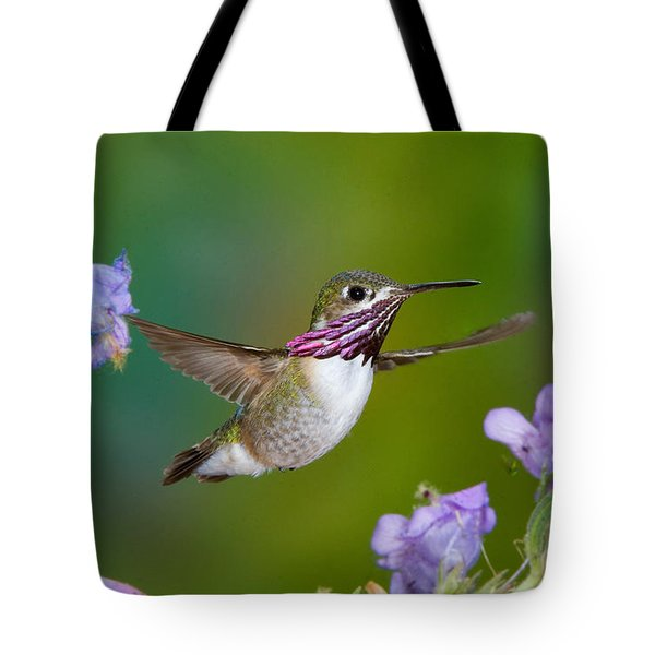 Calliope Hummingbird Tote Bag by Anthony Mercieca