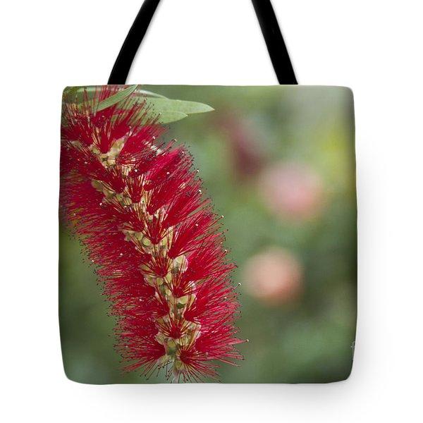 Callistemon Citrinus - Crimson Bottlebrush Tote Bag by Sharon Mau