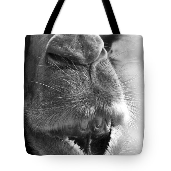 Camel Portrait Tote Bag by Heiko Koehrer-Wagner
