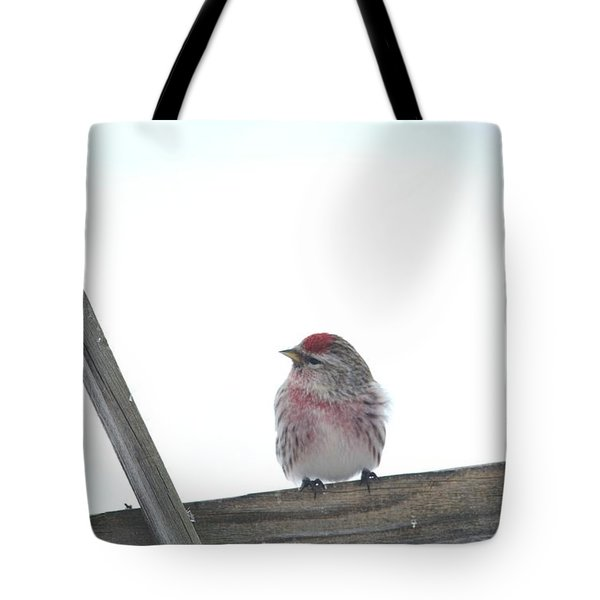 Tote Bag featuring the photograph Camera Shy by Dacia Doroff