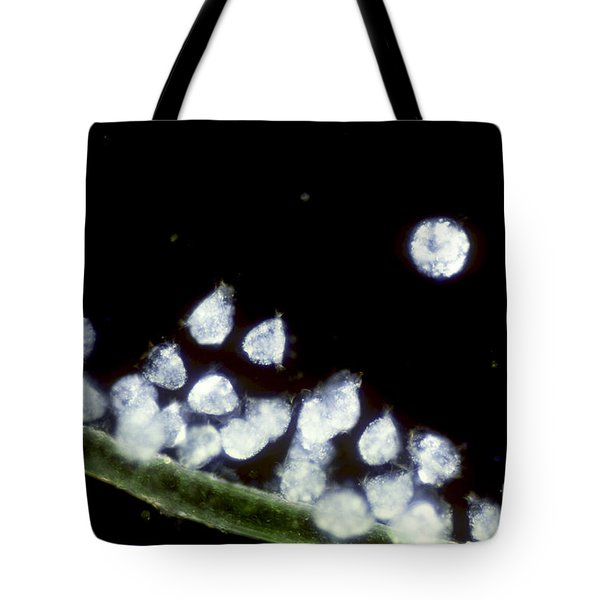 Campanella On Algae Tote Bag by Tom Branch