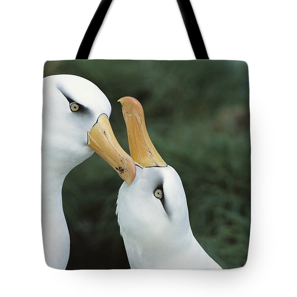 Campbell Albatrosses Courting Campbell Tote Bag by Tui De Roy