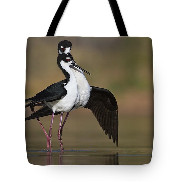 Tote Bag featuring the photograph Can I Have This Dance by Bryan Keil