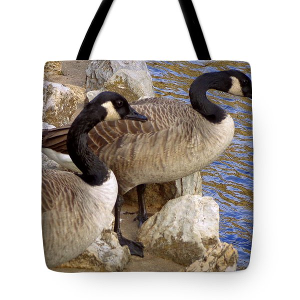 Tote Bag featuring the photograph Canada Geese by Joseph Skompski