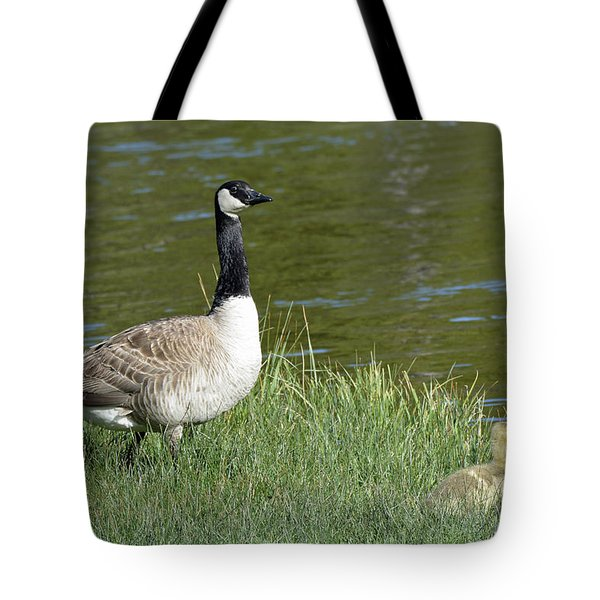 Canada Goose Mom With Goslings Tote Bag by Bruce Gourley