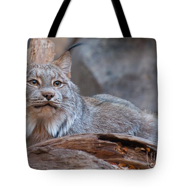 Tote Bag featuring the photograph Canada Lynx by Bianca Nadeau