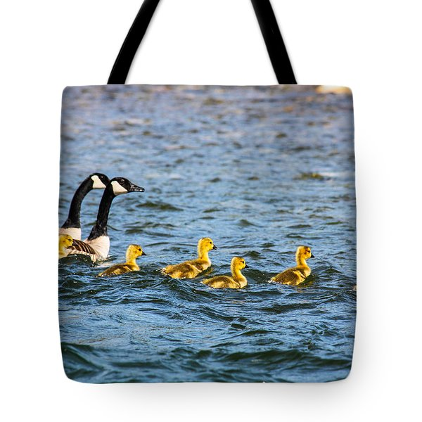 Canadian Geese And Goslings Tote Bag by Omaste Witkowski