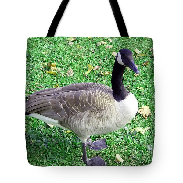 Canadian Goose Tote Bag by Aimee L Maher Photography and Art Visit ALMGallerydotcom