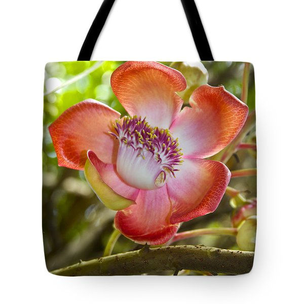 Cannonball Tree Flower Hawaii Tote Bag by Venetia Featherstone-Witty