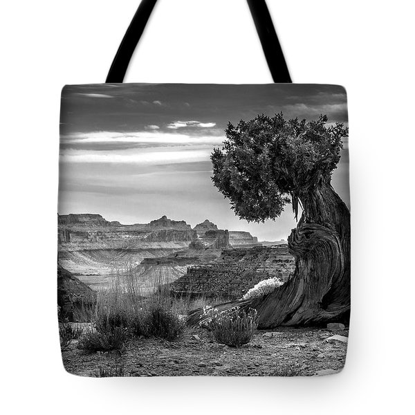 Canyon And Twisted Pine Tote Bag