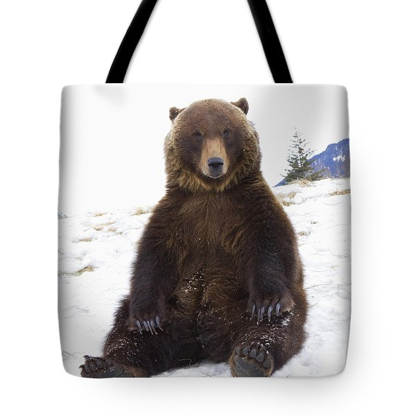 Captive Grizzly During Winter Sits Tote Bag by Doug Lindstrand