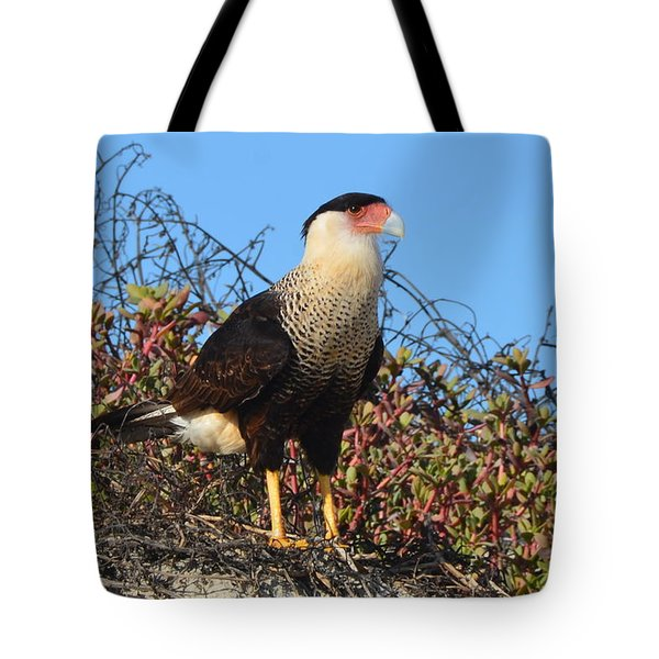 Tote Bag featuring the photograph Caracara In The Dunes by Debra Martz