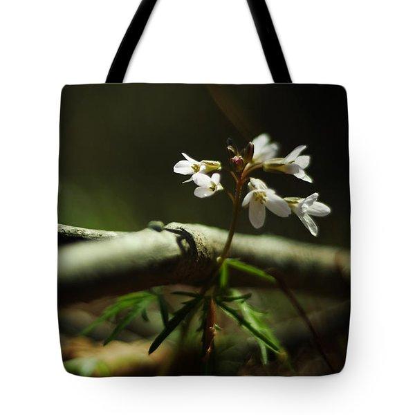Cardamine Concatenata Cutleaf Toothwort Tote Bag by Rebecca Sherman