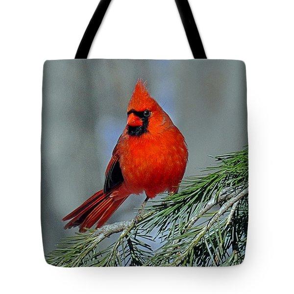 Cardinal In An Evergreen Tote Bag