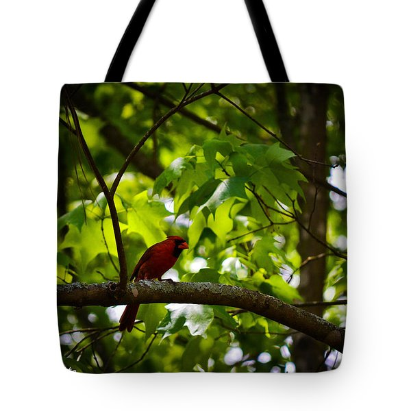 Cardinal In The Trees Tote Bag