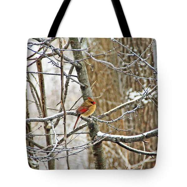 Cardinal In Winter Tote Bag by Aimee L Maher Photography and Art Visit ALMGallerydotcom