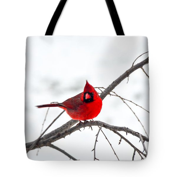 Cardinal On A Branch  Tote Bag by Mary Carol Story