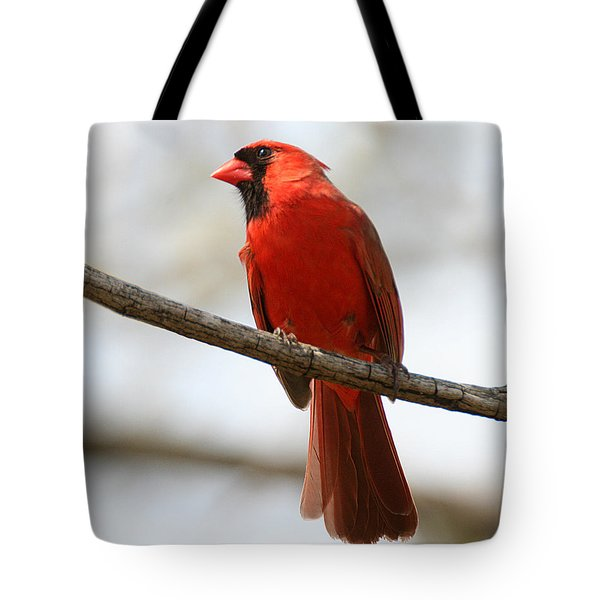 Cardinal On Branch Tote Bag