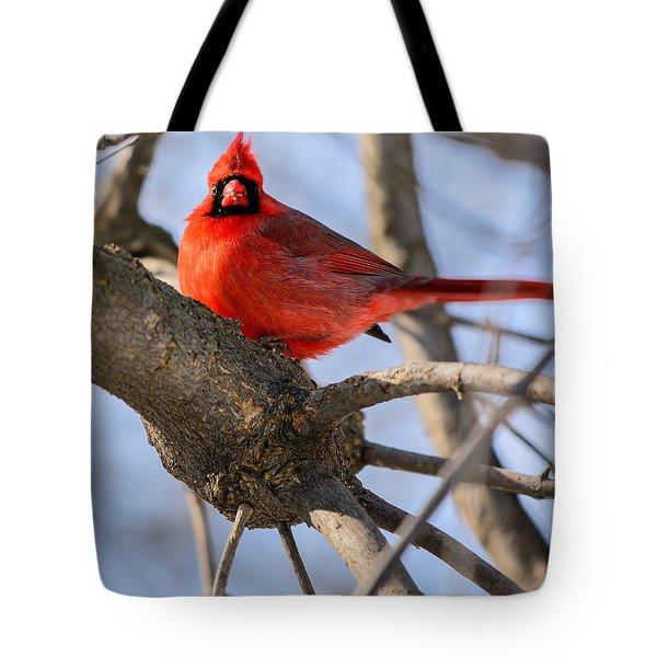 Cardinal Up Close Tote Bag
