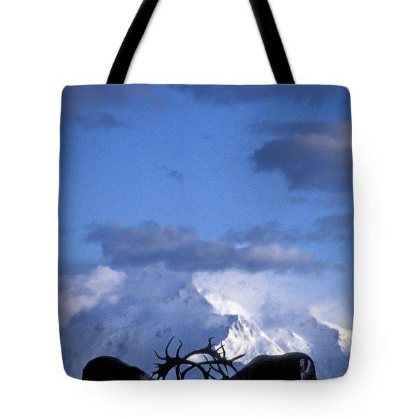 Caribou Fighting Tote Bag