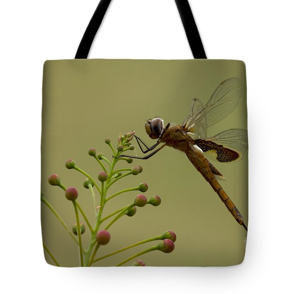 Carolina Saddlebags Tote Bag
