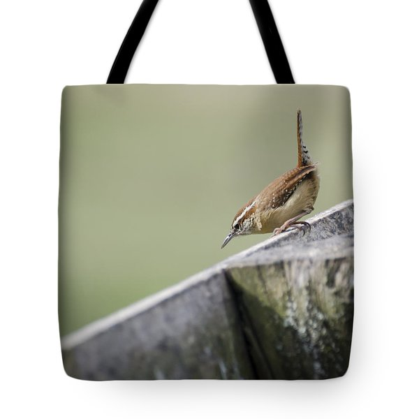 Carolina Wren Two Tote Bag by Heather Applegate